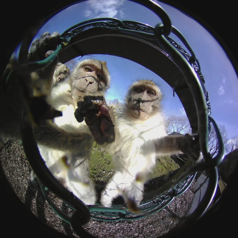 360 Image of Monkeys